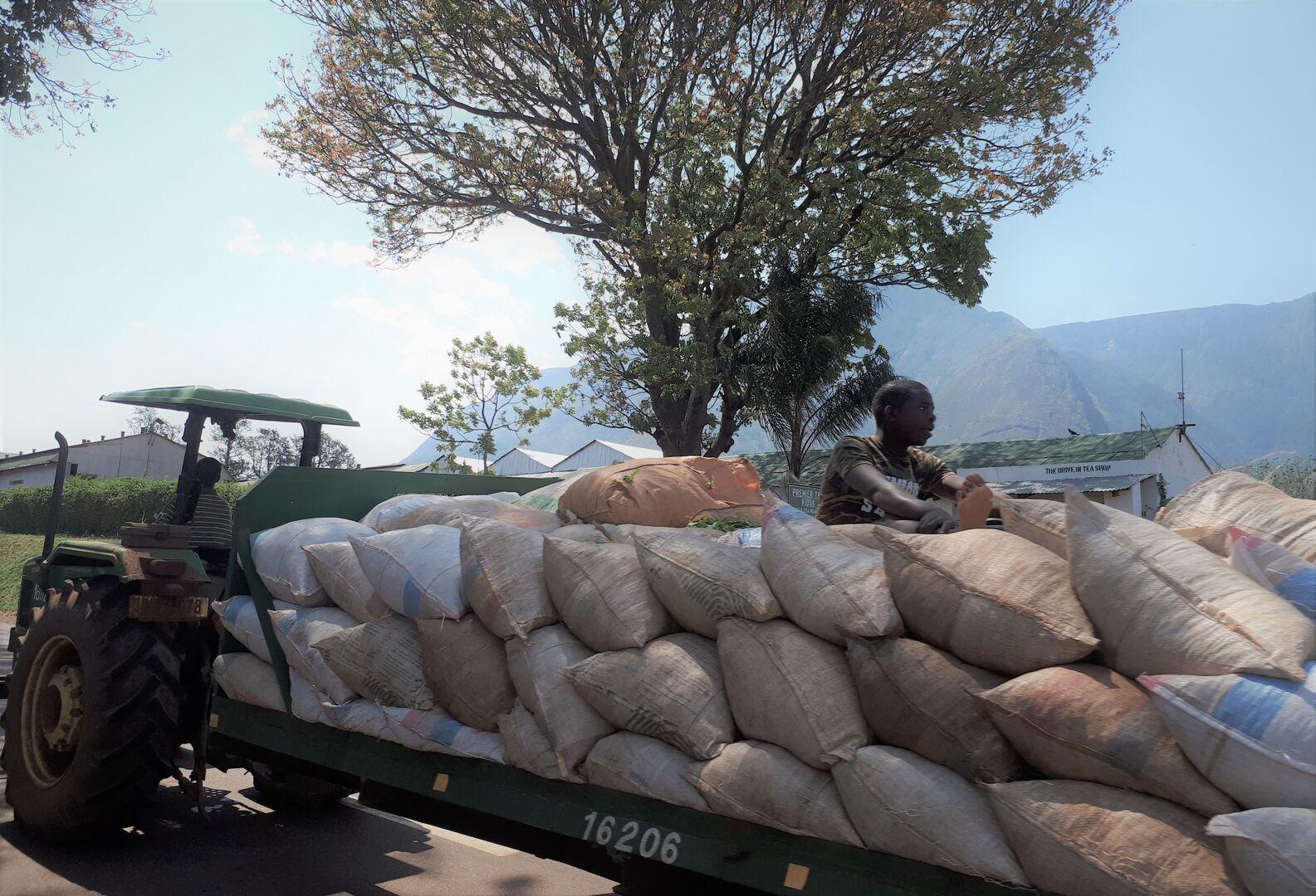 ECAM:  Employers' Consultative Association of Malawi